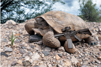 Desert tortoise militia leader Lester Agassiz armed and en route to the ranch