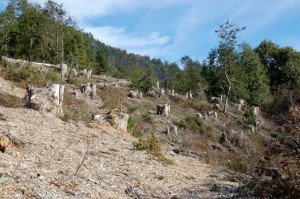 oakland-EB-Hills-clearcut